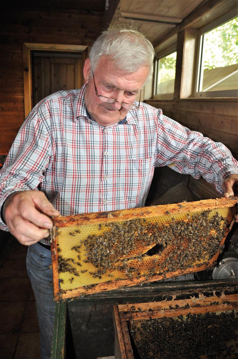 Künstliche Befruchtung. Sogar Bei Bienen!